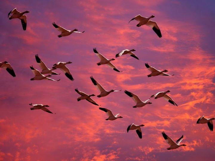 """""""જોજો તમારી મજા કોઈના માટે સજા ના બની જાય …!""""  Save birds from getting injured this Uttarayan. Don't fly kites between 8AM to 10AM & 4PM to 5PM."""